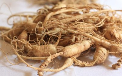 Wild Ginseng Industry Private Equity Fund Ltd